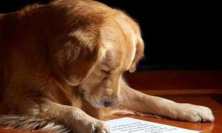 איך אפשר לחנך את הכלב?