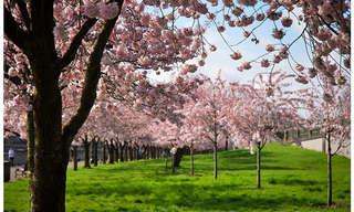 """יום בחיי פורטלנד -העיר הכי ירוקה בארה""""ב!"""