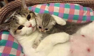21 חיות חמודות שיגרמו לכם לשכוח מכל הצרות שלכם