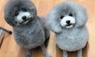15 תמונות של כלבים חמודים שבדיוק סיימו להסתפר