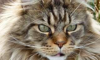 """מהו אושר, על פי החתול הסינימאת: ד""""ר יגאל גליקסמן"""