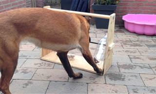 רעיון מבריק לצעצוע שיעסיק את הכלב למשך שעות