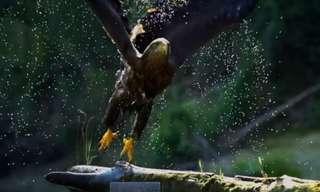 חופש פראי - סרטון מרהיב באיכות HD