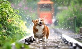 15 תמונות מקסימות של חיות חמודות בגשם