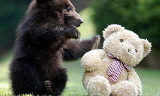 זוגות זוגות: אוסף מקסים של חיות ובובות!