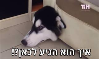 החיות השובבות שבסרטון הקצר הזה גרמו לנו להתגלגל מצחוק!