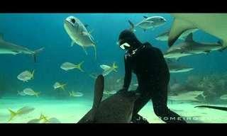 לרקוד עם כרישים - סרטון מדהים!!
