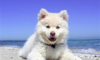 14 גיפים חמודים של כלבים שיעשו לכם את היום