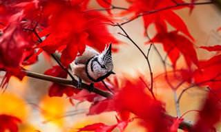 הצלמת הזה חושפת את האופי המיוחד של ציפורים בסדרת תמונות מקסימה