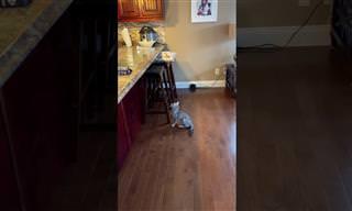 בסרטון הקצר והמצחיק הזה תגלו מה הדבר שהכי מפחיד חתולים...