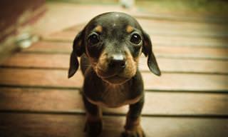 14 תמונות של גורים מקסימים והכלבים שהם הופכים להיות