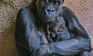 חיות אוהבות - ציטוטים על חברות ואהבת אמת