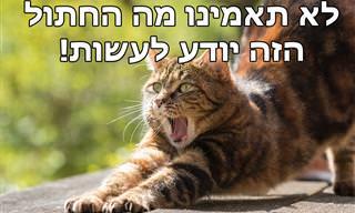 מדהים: החתול החכם הזה למד לעשות משהו חשוב ממש כמו בן אדם!