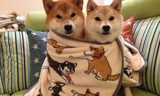 אלבום התמונות של משפחת הכלבים