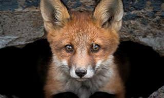 18 צילומים מדהימים של בעלי חיים חמודים ומקסימים בפינלנד