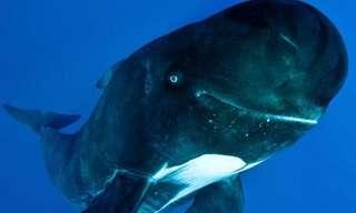 לוויתן מחייך - חמוד!!