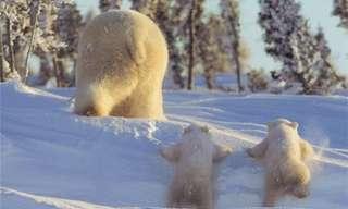 לא דובים ולא יער - מתוק להפליא...