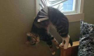 20 תמונות שמוכיחות שהסקרנות תקעה את החתול