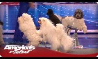 מופע כלבים מטורף!