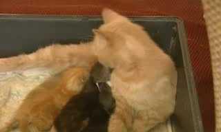 החתולה שאימצה את הארנב היתום
