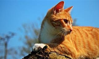 החתול משחק על הגג: בדיחה נהדרת על רגישות ומשפחה