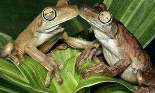 זוגיות בטבע: אהבה בתמונות מקסימות!