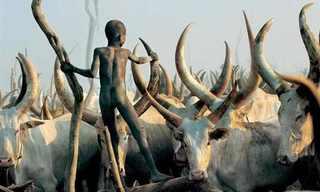 חייהם המרתקים של בני שבט הדינקה
