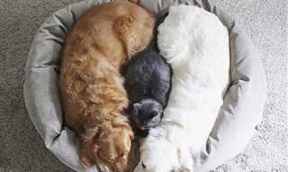 17 חיות שמראות איך נראית אהבה במשפחה