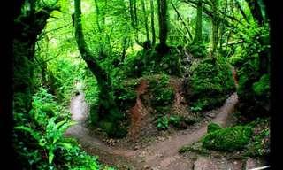 מסע ביערות הקסומים של שר הטבעות וההוביט