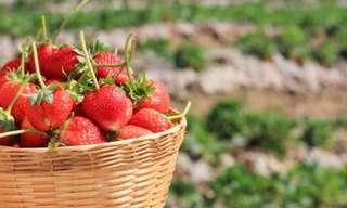 היתרונות הבריאותיים והקוסמטיים של תותים