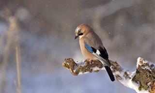 איך הציפורים מתמודדות עם מכשולים?