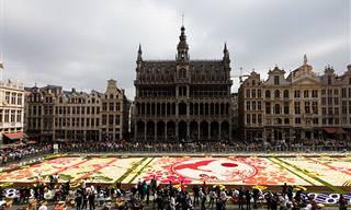שטיח יפני מדהים העשוי מ-600,000 פרחים בכיכר הגדולה של בריסל