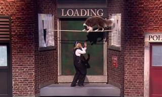 המופע המנצח של ג'ולס ומאטיס - השוטרת והכלב הגנב