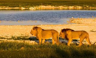 צפו בנופים המרהיבים של הפארק הלאומי אטושה בנמיביה