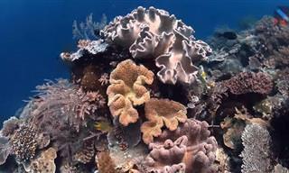 טיול ימי עוצר נשימה במשולש האלמוגים בראג'ה אמפאט