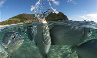 17 תמונות מתחרות הצילום התת-ימי לשנת 2020