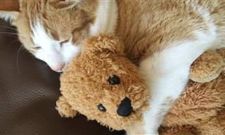 חתולים חמודים מתכרבלים עם בובות