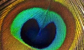 10 דוגמאות לסימטריה מושלמת בטבע