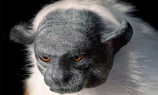 14 חיות נדירות ומדהימות מרחבי העולם שנמצאות בסכנת הכחדה