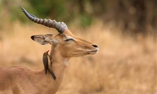 15 תמונות נהדרות של בעלי חיים מדהימים ויפים במיוחד!