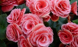 8 פרחים יפהפיים שמומלץ לשתול באביב