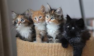 בדיחה על ארבע חתולים מוכשרים...