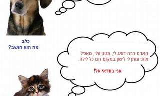 הבדל פשוט בין כלבים לחתולים
