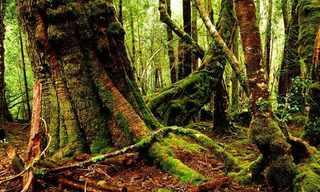 טסמניה - גן העדן הקטן שבקצה העולם