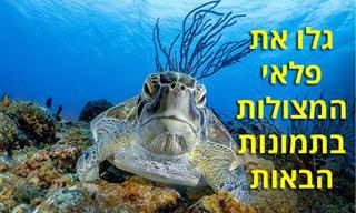 """15 תמונות מתחרות """"בטוח מתחת למים"""""""