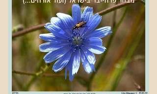 מבחר מרהיב מפרחי הבר בישראל