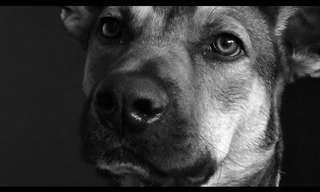 פאפי פייס: 58 כלבים ב-4 דקות!