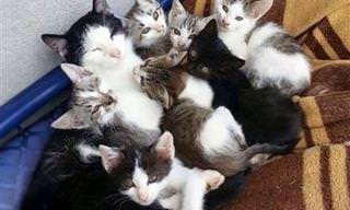 15 תמונות של בעלי חיים שמוכיחים כמה משפחה היא דבר חשוב