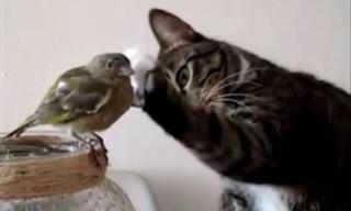 חתולים וציפורים – אויבים או חברים?