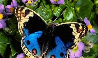 פרפרים מדהימים בטבע - צבעוניות מהפנטת!